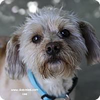 Adopt A Pet :: Einstein - Corona, CA