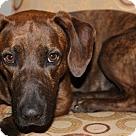 Adopt A Pet :: Ethridge