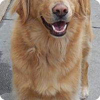 Adopt A Pet :: Beau - Portland, ME