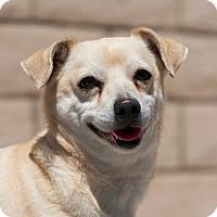 Adopt A Pet :: Biscuit - Coronado, CA