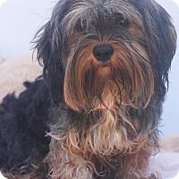 Adopt A Pet :: Doc McStuffins - Loomis, CA