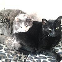 Adopt A Pet :: Voodoo - Madisonville, LA