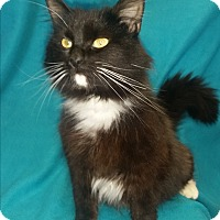 Adopt A Pet :: Misty - Covington, VA