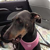 Adopt A Pet :: Quinn - Omaha, NE