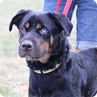 Adopt A Pet :: Laverne - Elyria, OH