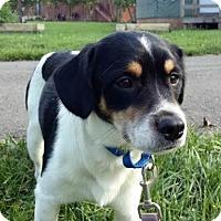 Adopt A Pet :: Brewster - Columbia, MD