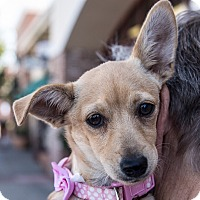 Adopt A Pet :: Charlie - San Marcos, CA