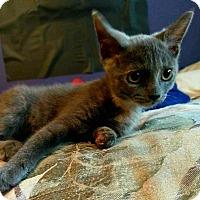 Adopt A Pet :: Vesta - Hampton, VA