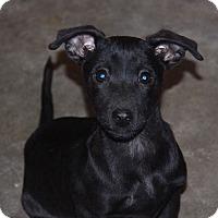 Adopt A Pet :: Beeper - Phoenix, AZ