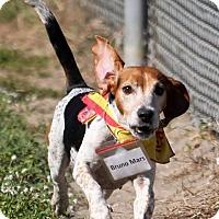 Adopt A Pet :: Bruno Mars - Tampa, FL