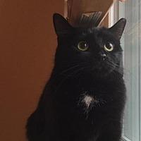 Adopt A Pet :: Riley Dewey (teenage female) - Harrisburg, PA