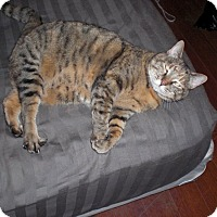 Adopt A Pet :: Tallulah - Houston, TX