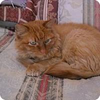 Adopt A Pet :: Delhi - Colorado Springs, CO