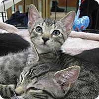 Adopt A Pet :: Sassy - Vero Beach, FL