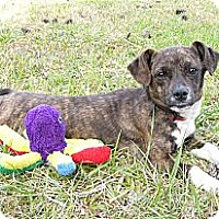 Adopt A Pet :: Irish - Mocksville, NC