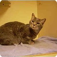 Adopt A Pet :: Squeekers - Bartlett, TN