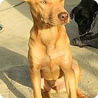 Adopt A Pet :: C.J. - San Ysidro, CA