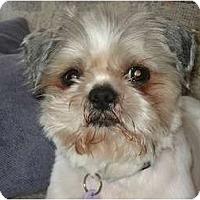 Adopt A Pet :: Finny - Rigaud, QC