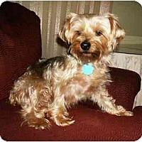 Adopt A Pet :: Liam - Mooy, AL