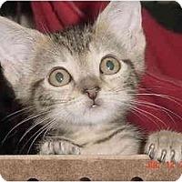 Adopt A Pet :: Sparrow - Inverness, FL