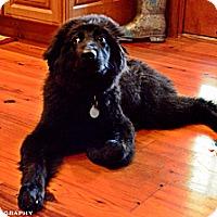 Adopt A Pet :: Addy - Homewood, AL