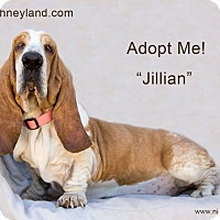 Adopt A Pet :: Jillian - Acton, CA