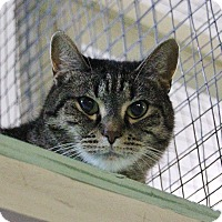 Adopt A Pet :: Cadbury - Mission, BC