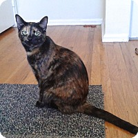 Adopt A Pet :: Sequoia - Colmar, PA