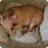 Adopt A Pet :: Nita - Cochran, GA