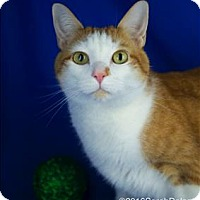 Adopt A Pet :: Tiggrr - Sherwood, OR