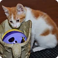 Adopt A Pet :: Squiggy - Davis, CA