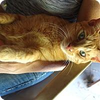 Adopt A Pet :: Harris - Waller, TX