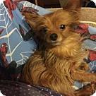 Adopt A Pet :: Jack (RBF)