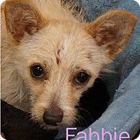Adopt A Pet :: Fabbie - Shreveport, LA