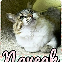 Adopt A Pet :: Nevaeh - Edwards AFB, CA