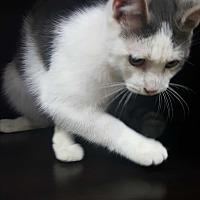 Adopt A Pet :: Lyndon Johnson - Albemarle, NC