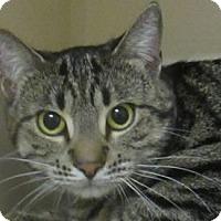 Adopt A Pet :: Hawaii - Lloydminster, AB