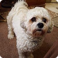 Adopt A Pet :: Jasper Boy - New Oxford, PA