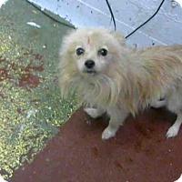 Adopt A Pet :: SAMMY - Atlanta, GA
