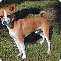 Adopt A Pet :: Hunter - Mountain Center, CA