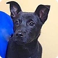 Adopt A Pet :: Trish - Sparta, NJ