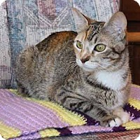 Adopt A Pet :: Jocelyn - Flower Mound, TX