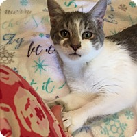 Adopt A Pet :: Derby - Butner, NC