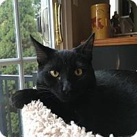 Adopt A Pet :: Truffle - Naugatuck, CT