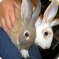 Adopt A Pet :: Orangina & Cuteness - Los Angeles, CA