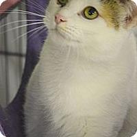 Adopt A Pet :: Salem - Muskegon, MI