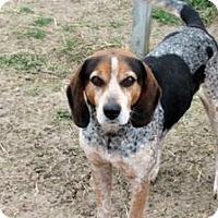 Adopt A Pet :: Kai - Quinlan, TX