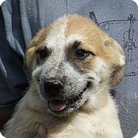 Adopt A Pet :: Mae - Jackson, TN
