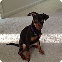 Adopt A Pet :: Agatha - Malaga, NJ