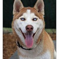 Adopt A Pet :: Max - Huntington Station, NY